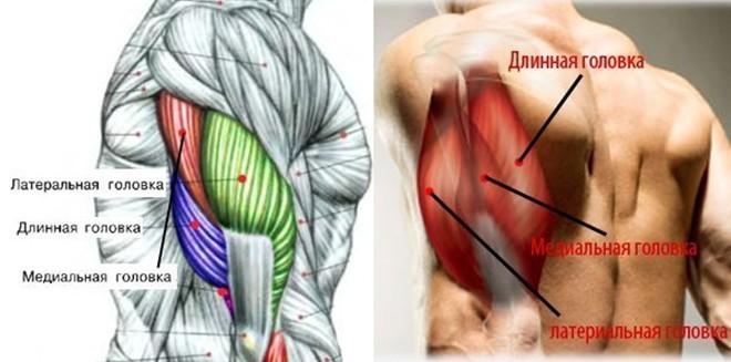 CTS оболочка бицепса,трицепс и плечевой контур